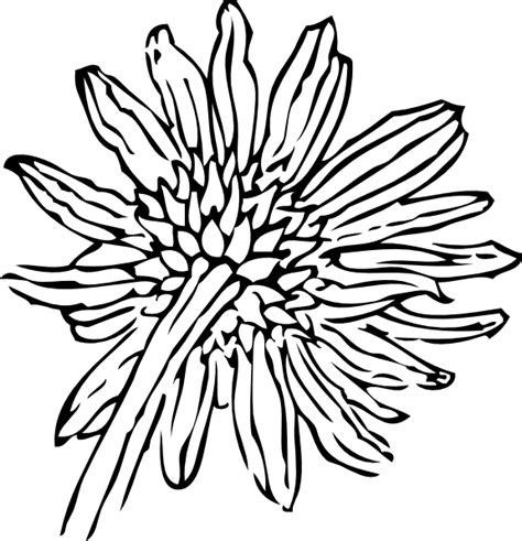 Sunflower Outline Png by Back Of A Sunflower Outline Clip At Clker Vector Clip Royalty Free