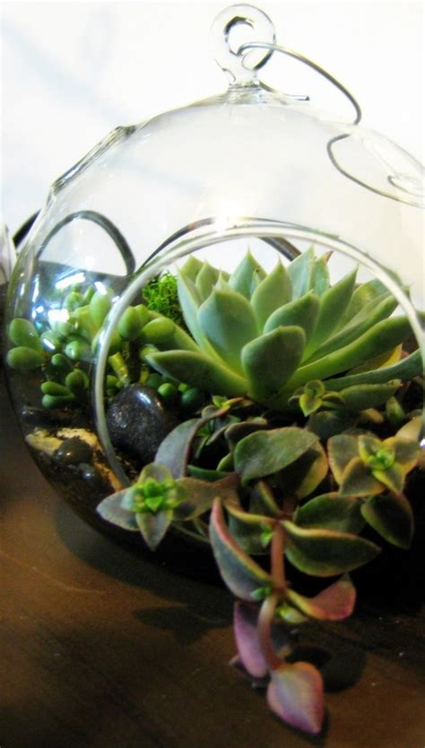 facts about succulents for more information about terrarium containers can visit