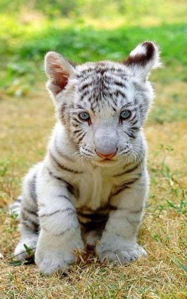 imagenes animales bellos resultado de imagen para imagenes animales tiernos