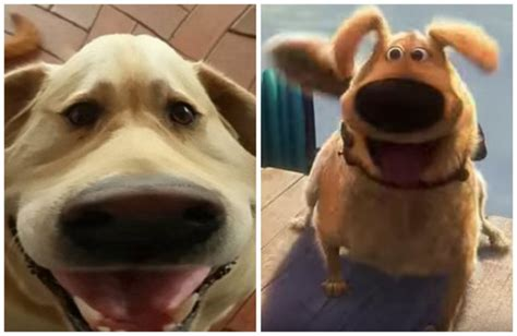 dogs name in up snapchat filter transforms your into dug from quot up quot