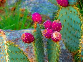 Desert Flowering Plants - cactus hd wallpaper pixelstalk net