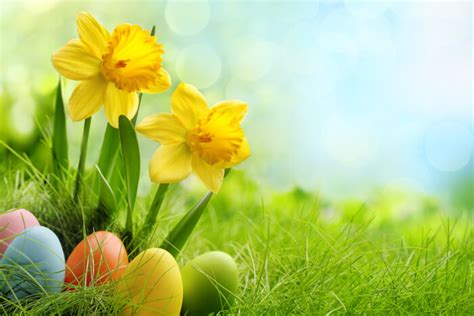 easter flowers flower meaning - Blumen Ostern