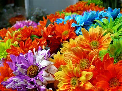 immagini fiori peisaje de primavara pt desktop imagini frumoase din