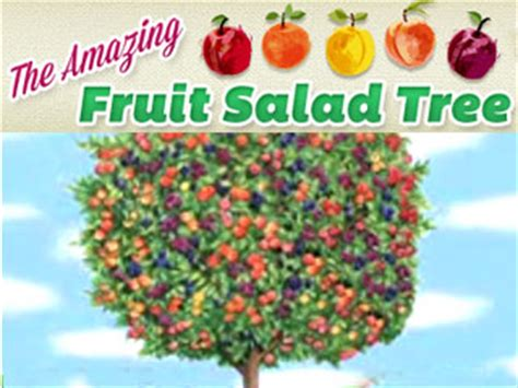 salad fruit tree fruit salad tree five kinds of fruit on one tree as