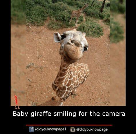 Giraffe Meme - funny giraffe memes www pixshark com images galleries