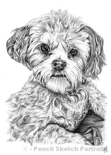 dogs drawings drawings pencil sketches of dogs and puppies for sale
