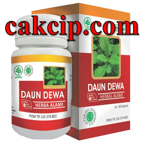 Hiu Daun Dewa Herbal Daun Dewa daun dewa hiu gresik jual daun dewa herbal indo utama