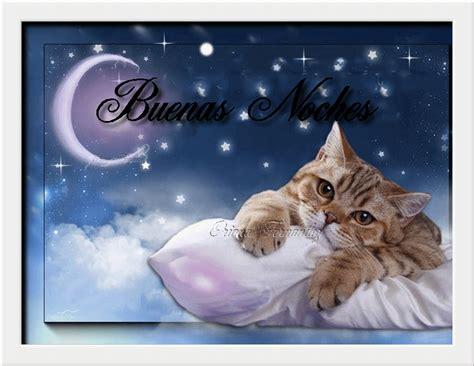 imagenes buenas noches de gatitos como en la vida de todo un poquito quot buenas noches en