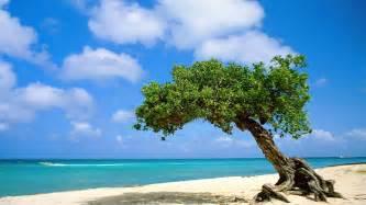 Greats resorts aruba resorts casa del mar