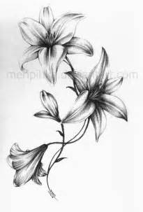 Amaryllis Flower Meaning - pics photos design calla lily flower black and white