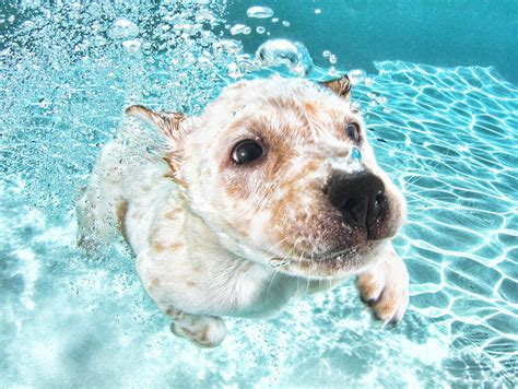 puppy water underwater puppies dive into these photos of canine cuteness today