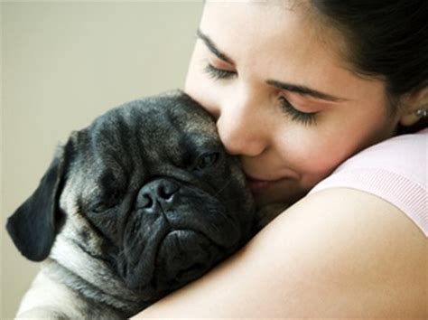 coccidia in puppies symptoms how to treat a with coccidiosis