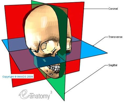 sagittal section definition 25 best ideas about sagittal plane on pinterest general