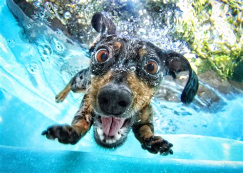 underwater dogs friends print shop underwater dogs by seth casteel