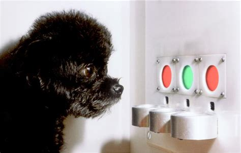 dogs color vision how dogs see the world the evolutionary story of color