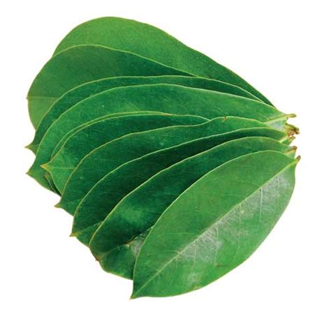 Obat Herbal Daun Sirsak lebih aman dengan obat herbal penyakit jantung ahli kolesterol