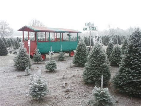 chirstmas tree farm in vancouver wa thorntons treeland 98662 vancouver 7617 ne 119th st