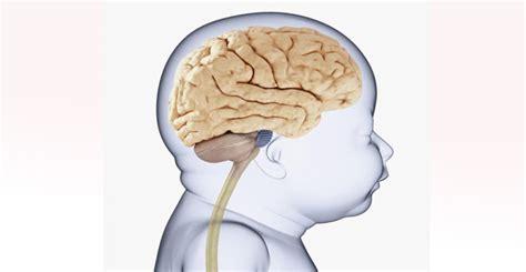 Baby Brain by Human Brain
