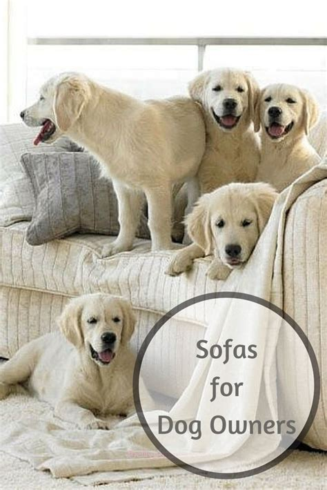 best couch for dog owners 67 best images about home tips tricks sofasofa on
