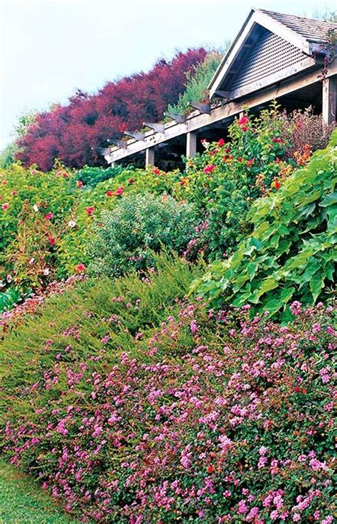 steep sloped backyard ideas 25 best ideas about sloped garden on sloping