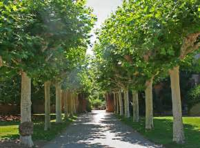 common backyard trees 10 most common trees in melbourne landscape