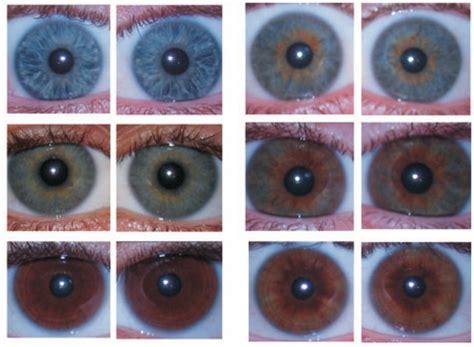 colore degli occhi diversi il colore degli occhi insight