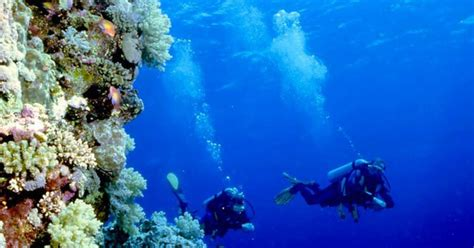 dive di diving bunaken manado two fish divers