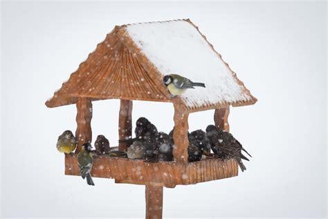 tips for winter bird feeder maintenance