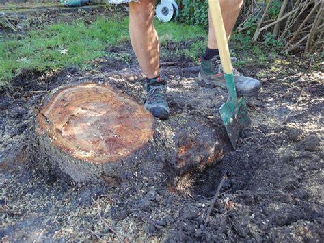Baumwurzel Als Deko Bearbeiten by Baumstumpf Entfernen Werkzeuge Und Tipps