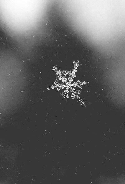 vsco livbarnhart winter  photography wallpaper