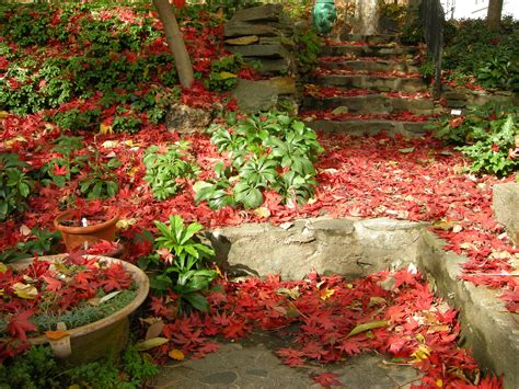 garden fall planting shade gardening in fall leaves on the lawn carolyn s