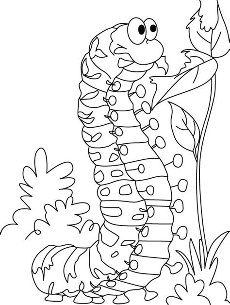coloring page caterpillar to butterfly free coloring pages of caterpillar to butterfly