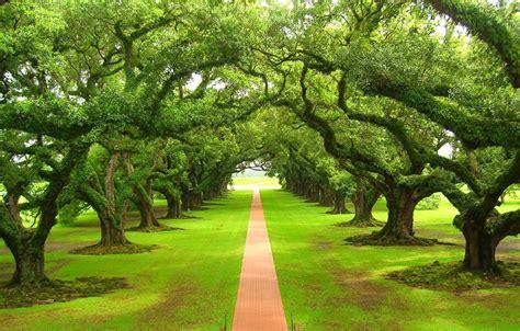 imagenes de jardines increibles megapost 50 imagenes de paisajes increibles taringa