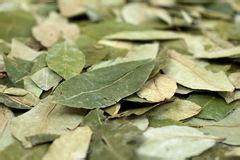 Bilder Aus Getrockneten Blättern by Kokain Auf Koka Bl 228 Ttern Stockfoto Bild 20715800