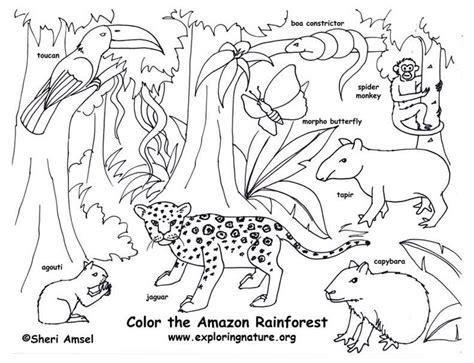 Rainforest Coloring Pages Preschool | rainforest color pictures rainforest amazon coloring