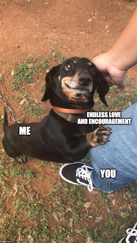 Crazy Dog Lady Meme