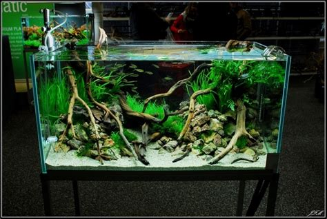 Aquascaping Layouts by Layout By Kirua Aquascaping Aquariums Vivariums