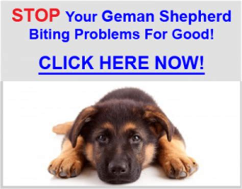 how to stop a german shepherd puppy from biting stop german shepherd puppy biting german shepherd