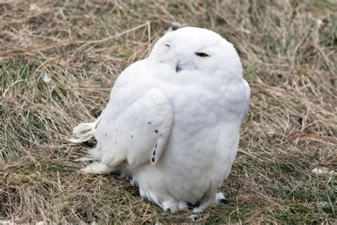 5 Great To Admire by 40 Great Owl Pictures To Admire