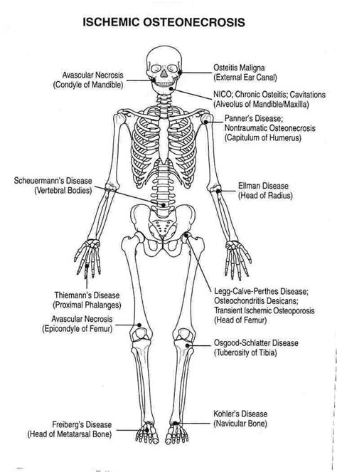 skeleton diagram wiring diagram human skeleton quiz front and back with