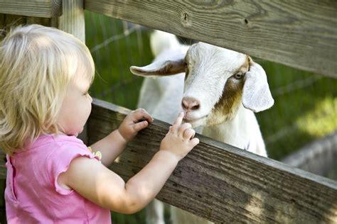start  petting zoo business