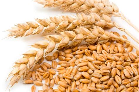 3 food sources of whole grains 6 must eat foods for pregnancy pregnancy diet
