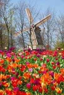 tiptoe through the tulips at keukenhof gardens near amsterdam