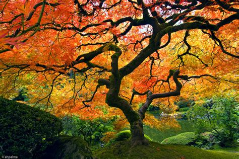 mellow monk s green tea blog beautiful japanese garden tree in autumn and clouds over africa