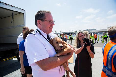 southwest airlines dogs southwest airlines fills cabin with pets orphaned during houston in dramatic