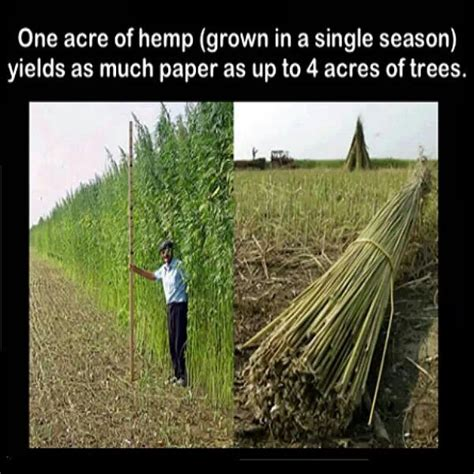 How To Make Paper Out Of Hemp - paper from hemp vs paper from trees all