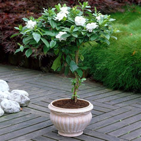 indoor plant seeds online buy wholesale indoor plant pots from china indoor