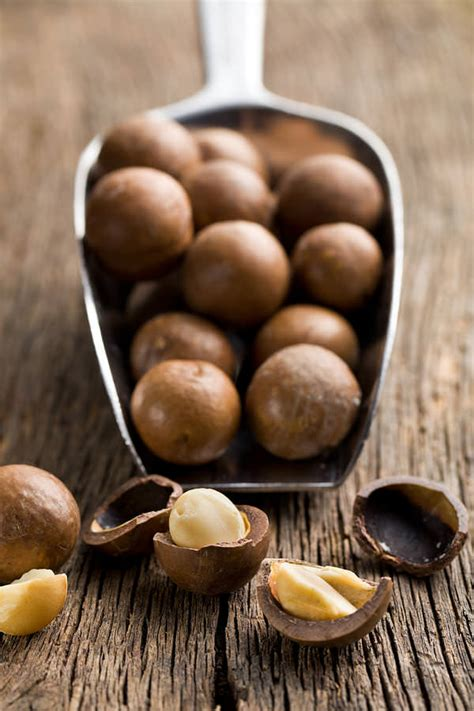 macadamia nuts dogs 15 common foods dangerous to my reference