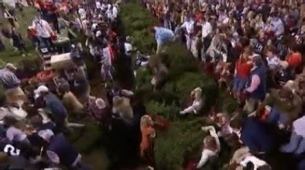 auburn fans in bushes rushing field at hare gets stuck in bushes