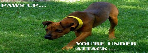 attacks other dogs why do dogs attack why do dogs